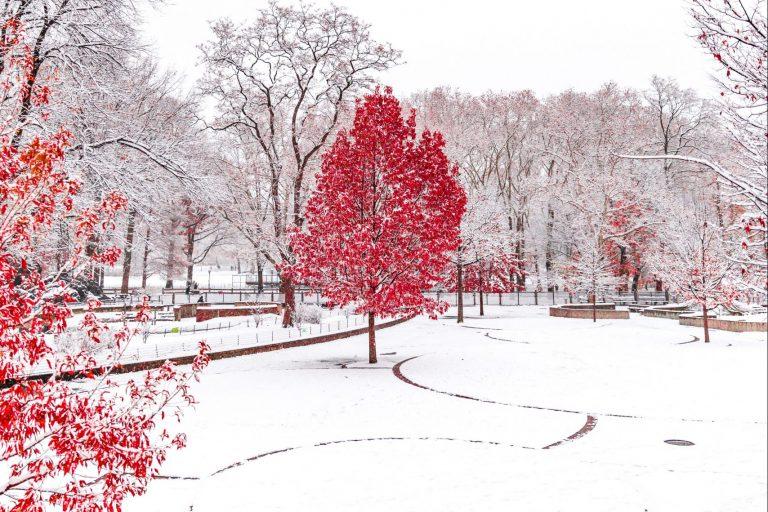 Michigan winter lawn care tips
