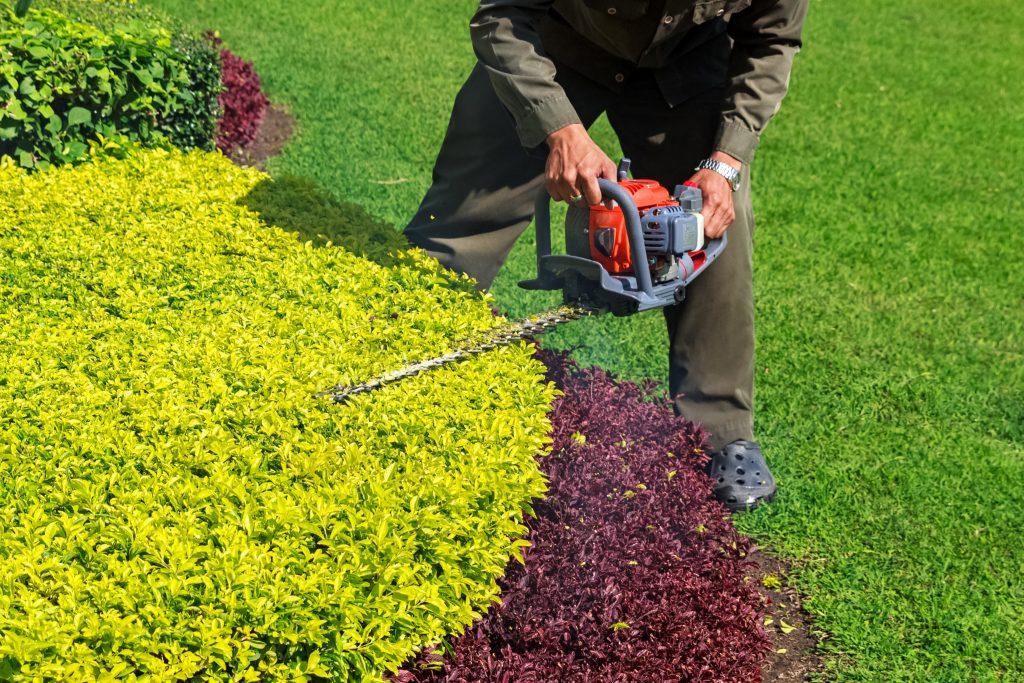 victory shrub trimming