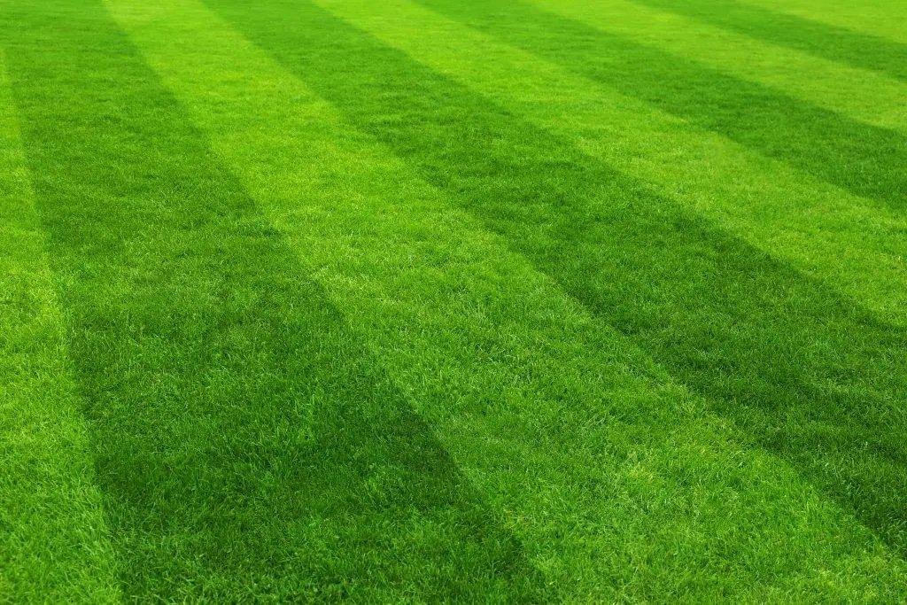 armada lawn maintenance