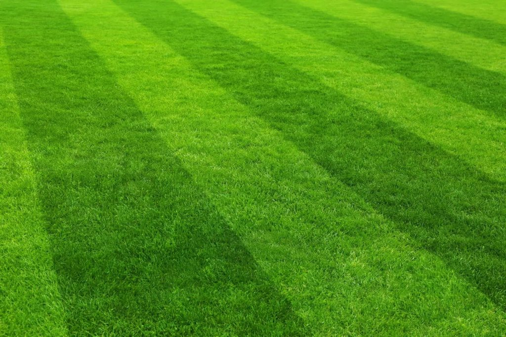 weekly lawn maintenance service