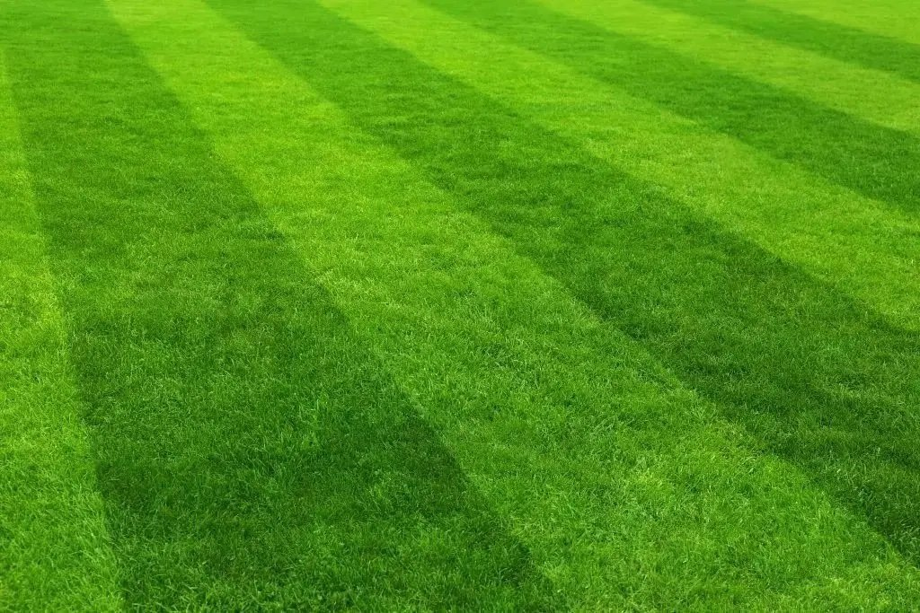 Shelby Township lawn maintenance