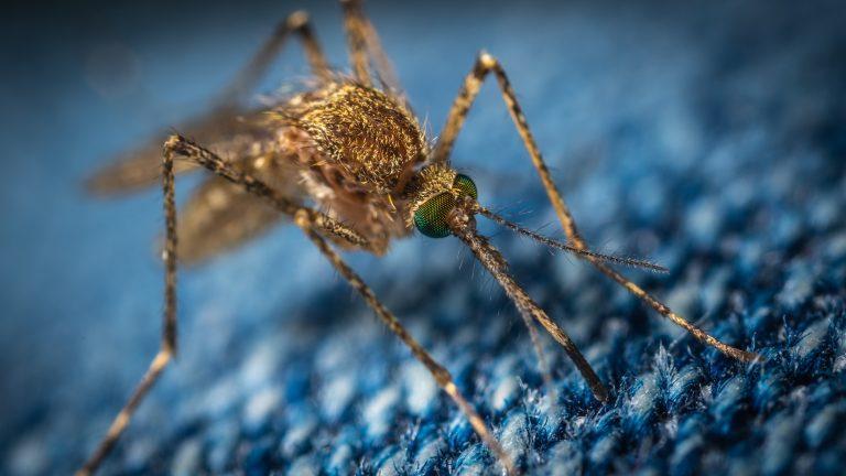 Backyard Mosquito Spray
