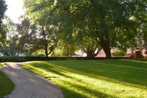 Summer healthy lawn